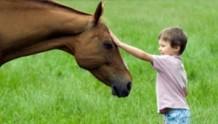 cavallo_bimbo