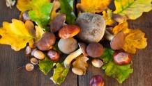 evento-funghi-castagne